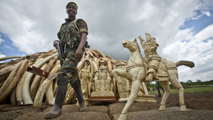 a5ff55d067932e A ranger from the Kenya Wildlife Service (KWS) guards a pyre of ivory in