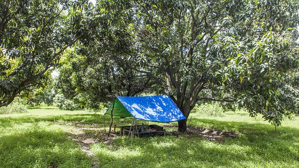 A worker rests in the shade at a mango orchard on the estate of Kunwar Vikram Jeet Singh in Kuchesar, Uttar Pradesh, on May 24